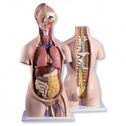 Torzo klasické s otevřeným krkem a zády - 18 částí