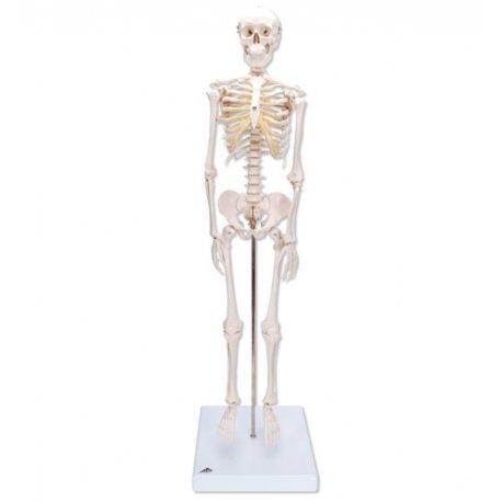 Model kostry - mini