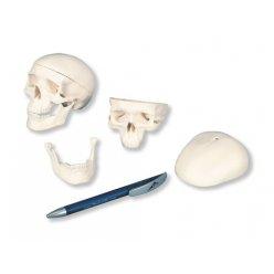Lebka mini 10x8x8 cm - 3 části
