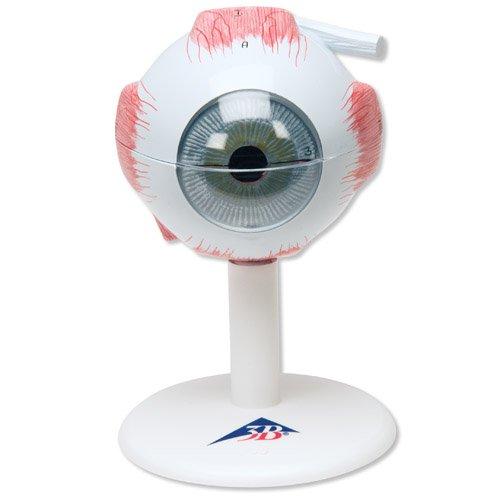 Model oka - třikrát zvětšeno - 6 částí