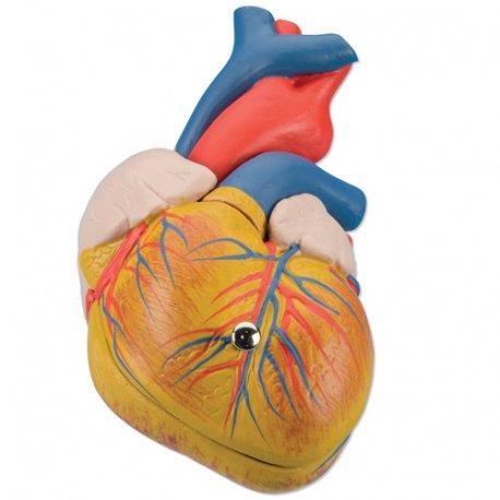 Model srdce klasický - 2 části