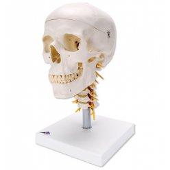 Lebka na krční páteři - 4 části
