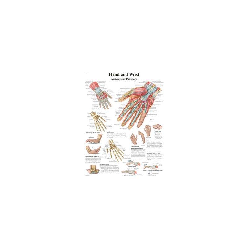 Schéma - ruka a zápěstí - papír - 50x67 cm