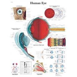 Schéma - lidské oko - AJ - 50x67 cm