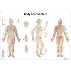 Schéma - akupunkturní body - papír - 68x98 cm