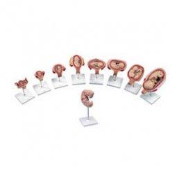 Luxusní série těhotenství - 9 modelů